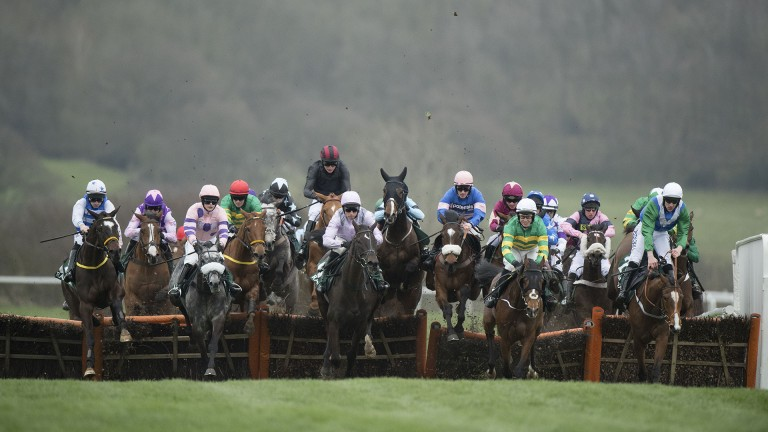 Cheltenham: the fatalities report included 17 recommendations for the festival