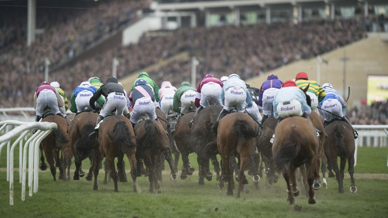There are 28 races at the Cheltenham Festival