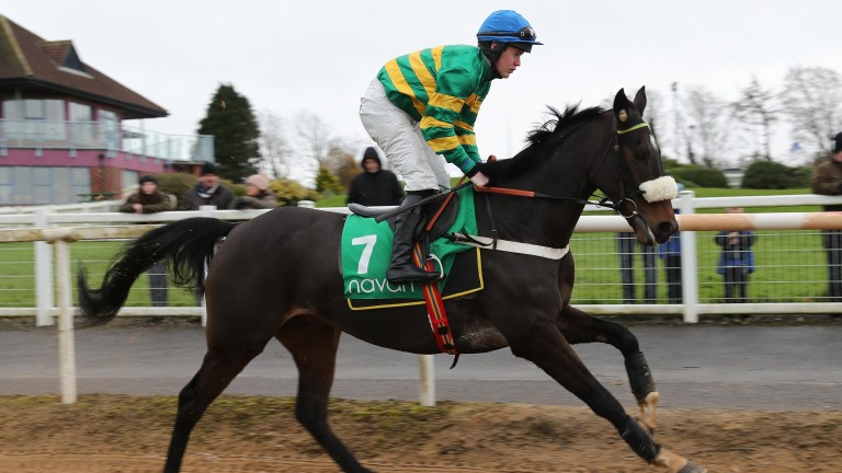 Sort It Out came right back to form in the Pertemps Qualifier at Punchestown last month