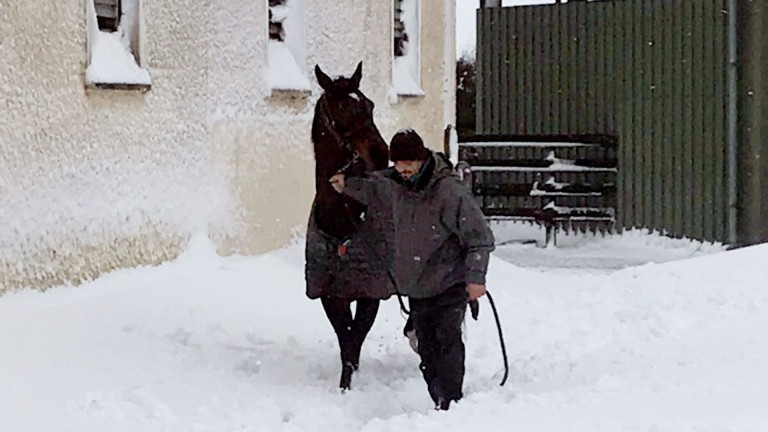 Making their way through the snow at Tom Taaffe's yard