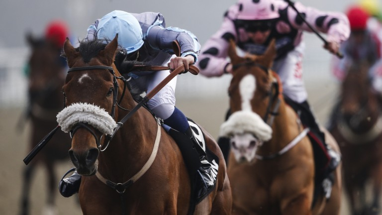 Attain: Lingfield specialist gave Archie Watson a helping hand on Saturday
