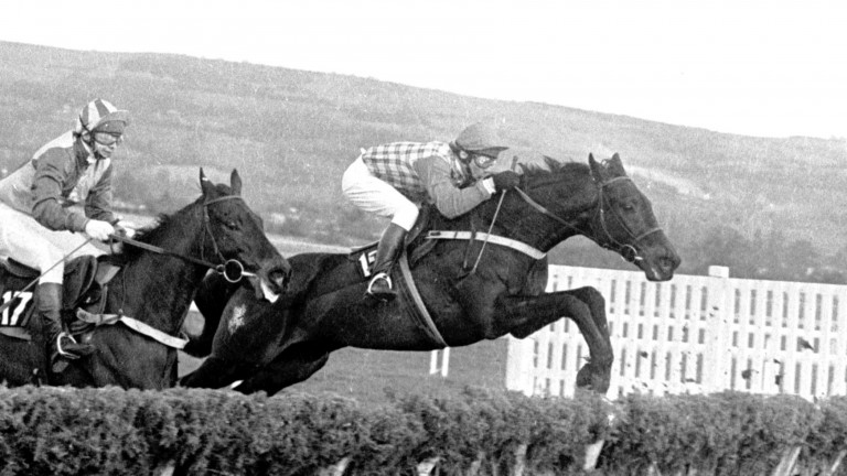 Sea Pigeon and John Francome clear the last en route to victory in the 1981 Champion Hurdle