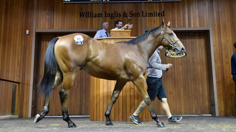 James Harron, who bought this son of Pierro, was active in Melbourne