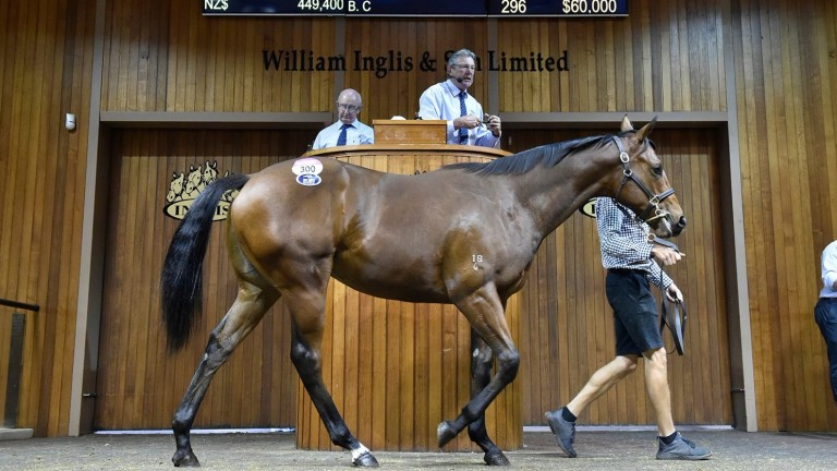 The session-topping Rubick colt in the Melbourne sales ring before fetching A$420,000
