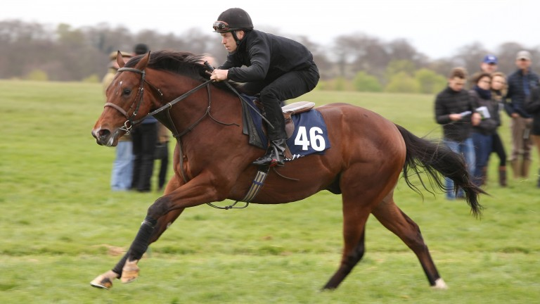 172 two-year-olds have been entered for the Tattersalls Craven Breeze-Up Sale