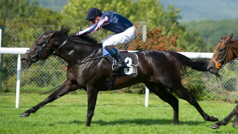 Johnny Barnes: related to many high-class horses, particularly in France