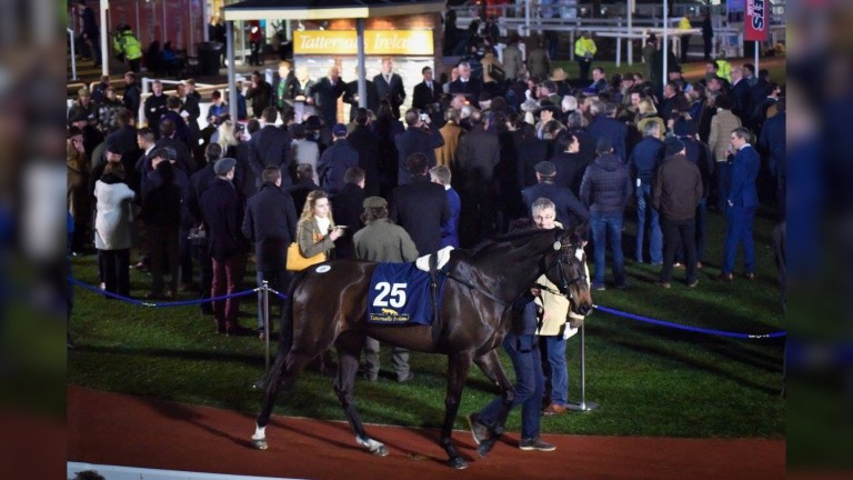 Last year's Tattersalls Ireland Cheltenham Festival Sale saw five-year-old mare Maire Banrigh sell for £320,000