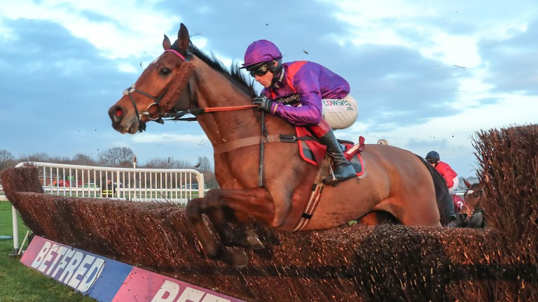 Wonderful Charm: provides the best chance for Nicholls