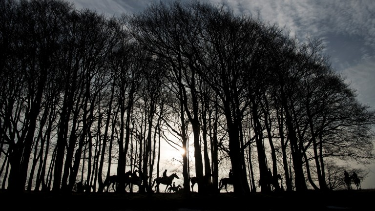 First lot walk through the trees at the top of the gallops