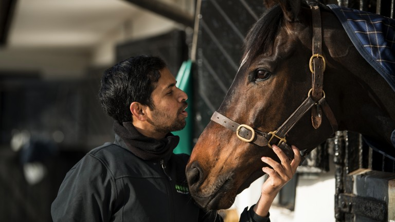 Altior and his groom Dastagir Hussain Mohammed share a quiet moment