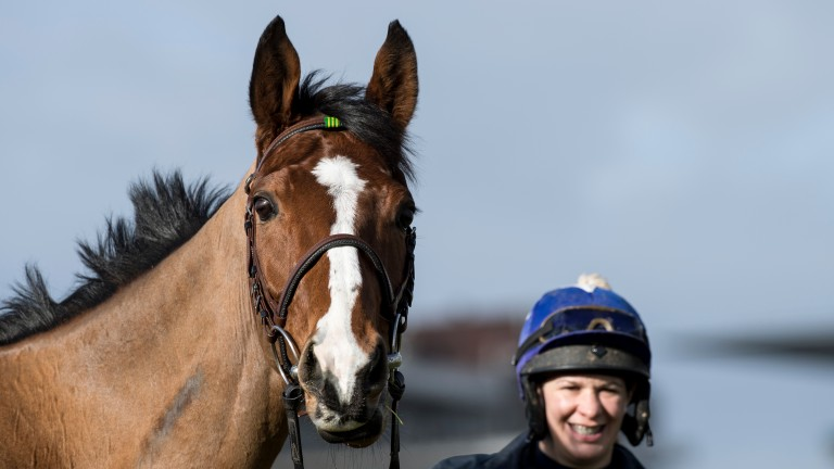 Faugheen at Cheltenham on Sunday morning with Rachel Robins