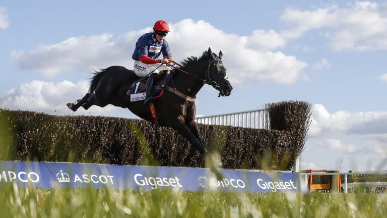 Black Corton: has not stopped improving and is in the form of his life
