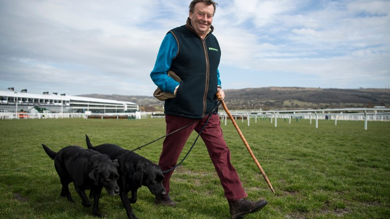 Nicky Henderson walks the course with his two black labradors