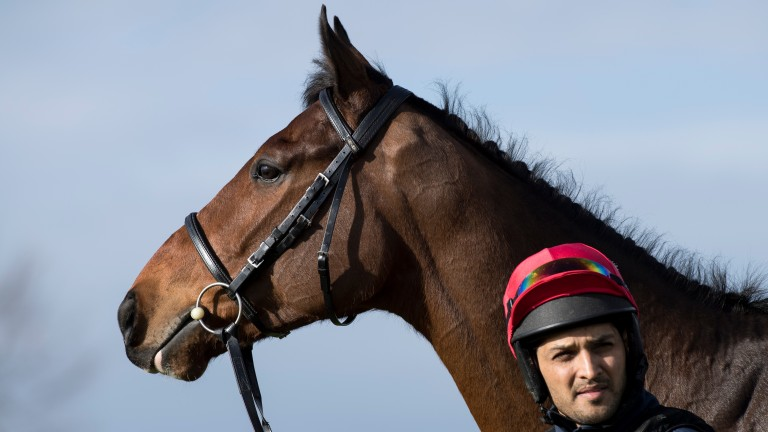 Ears pricked: Racing Post Arkle favourite Footpad glances at the course with groom Syed Raza