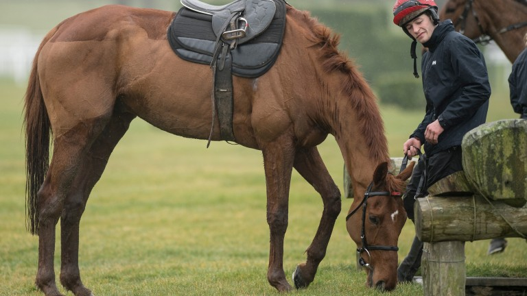 Yorkhill and David Mullins on the gallopsCheltenham 12.3.18 Pic: Edward Whitaker