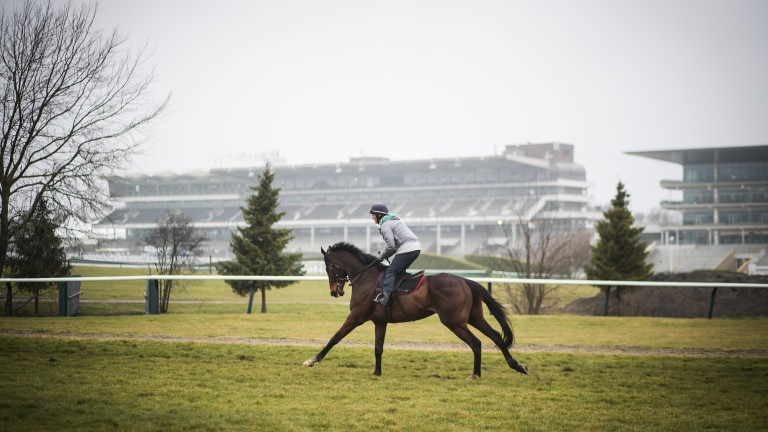 Is the old magic still there? Douvan with work-rider Hollie Conte is put through his paces on the centre of the track ahead of tomorrow's Champion Chase