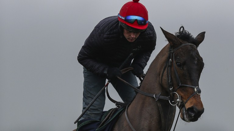 Special Tiara enjoys morning exercise at Cheltenham last year