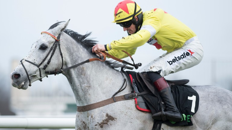 Politologue: one of several jumps performers for his late sire