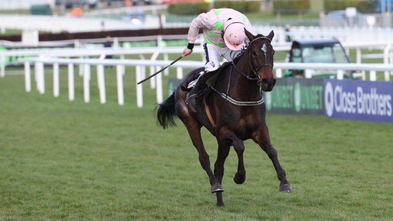 Benie Des Dieux is the horse Willie Mullins considers his best chance of a Festival winner