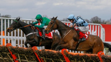 Mr Antolini: a 20-1 winner for Paul Kealy in the Imperial Cup