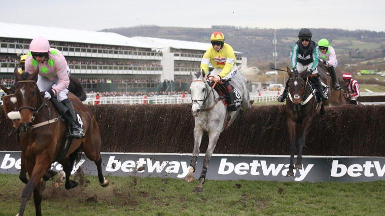 Douvan (left) ahead of Politologue (grey) and Altior (black)