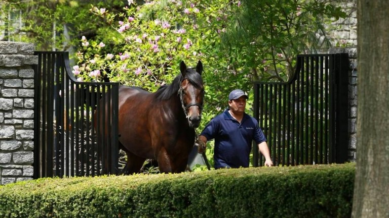 Uncle Mo: responsible for the top lot at Fasig-Tipton on Wednesday