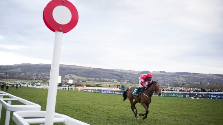Laurina: comes home in splendid isolation in the Mares' Novices' Hurdle
