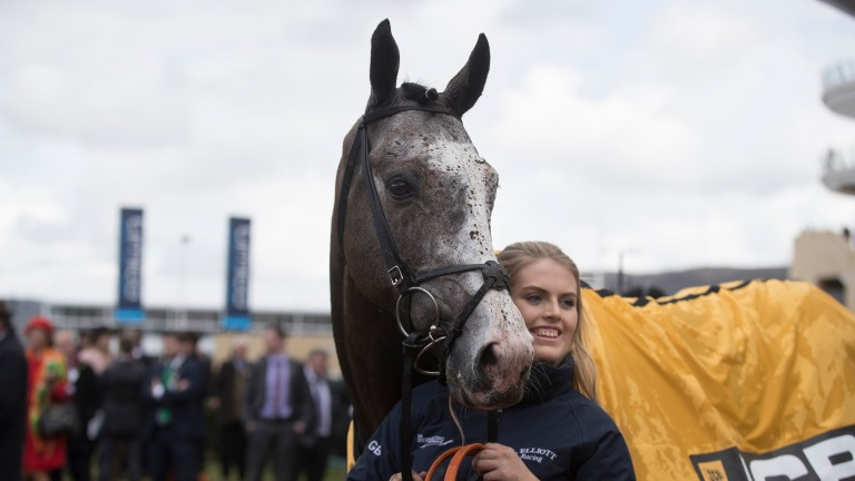 Farclas pictured with groom Georgie Benson after winning the JCB Triumph Hurdle at Cheltenham