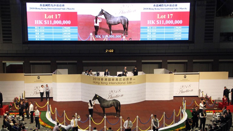 Lot 17: the Holy Roman Emperor half-brother to Wings Of Eagles sold for a record HK$11 million