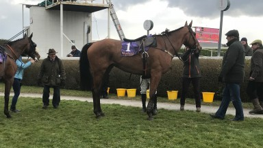 The imposing Sumios Novios after winning the veteran's chase at Wexford on Saturday