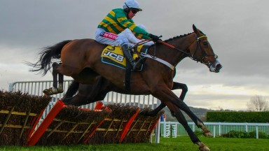 Apple's Shakira: her popularity with punters boosted the Triumph Hurdle turnover