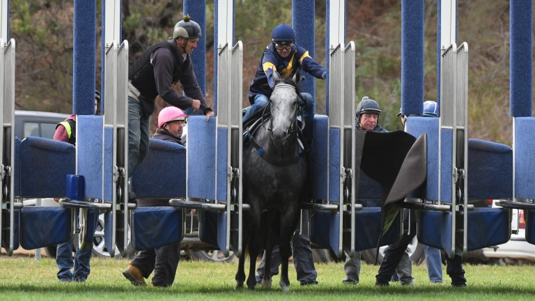 Chautauqua (Dwayne Dunn) left in the stalls long after the other horses in a barrier trial have departed
