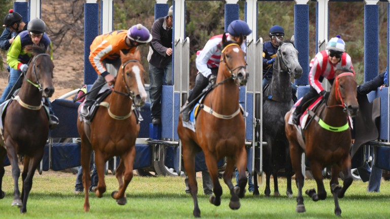Not playing ball: the other jockeys look back as Chautauqua refuses to break from the stalls under Dwayne Dunn at the Cranborne barrier trials