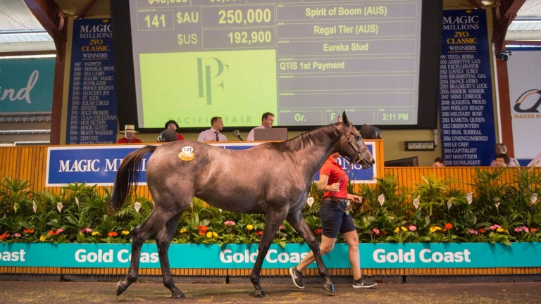 New record set for the Magic Millions Gold Coast March Yearling Sale as Spirit Of Boom filly knocked down for A$250,000