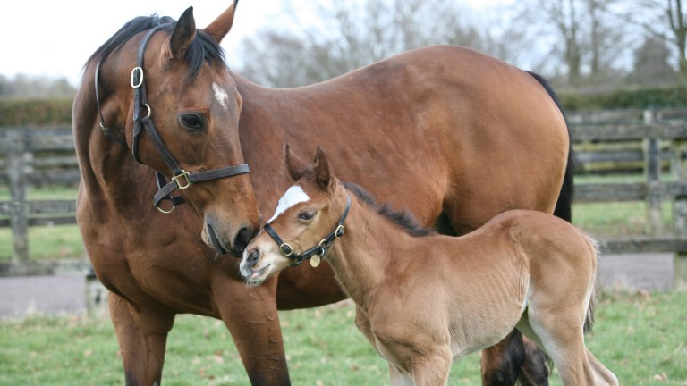 Kind with her Galileo filly, a sister to dual world champion Frankel