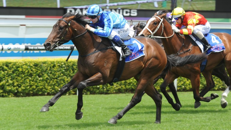Promising first-season sire Unencumbered (blue) had been diagnosed with chondritis