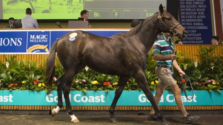 The Spirit Of Boom filly offered by Lyndhurst Farm and knocked down for a record A$430,000