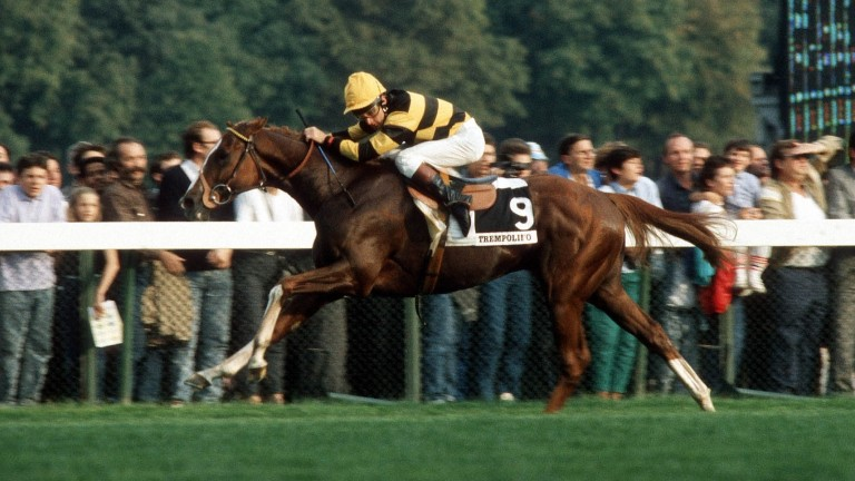 Trempolino and Pat Eddery come home clear in the 1987 Prix de l'Arc de Triomphe at Longchamp