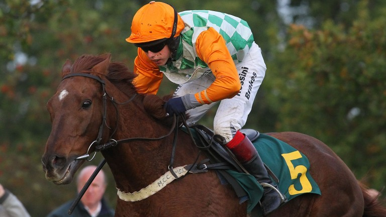 Peak Seasons: 15-year-old is due to go on sale at York Horses Sale on Friday