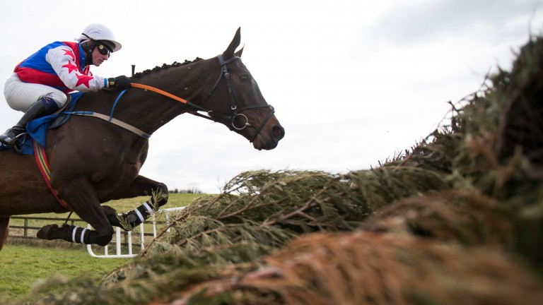 Youcantcallherthat and Denis Hogan have strong claims at Fairyhouse