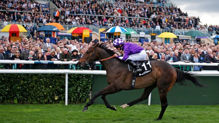 A half-sister to stakes-winning Tupi has been catalogued