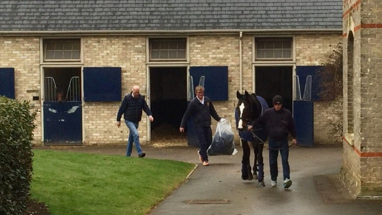 Eminent leaves Sefton Lodge for the last time followed by Freddie and Martyn Meade