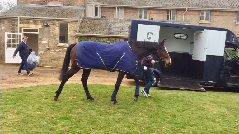Eminent: the Group 2 winner was driven to his new home by Freddie Meade