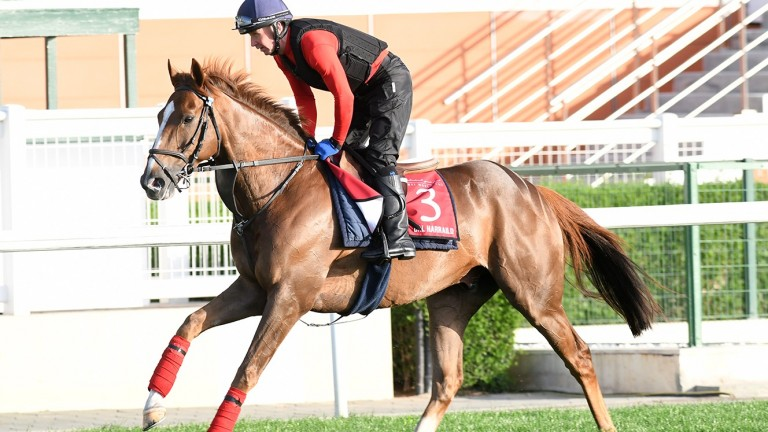 Dal Harraild, who represents William Haggas in the Dubai Gold Cup, stretches his legs