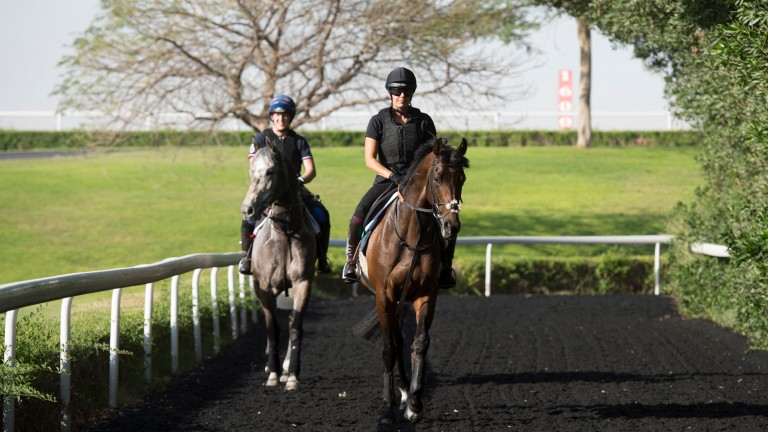 Lambourn's finest: The Charlie Hills-trained Magical Memory (grey) and Clive Cox's Khalidi stick together in Dubai