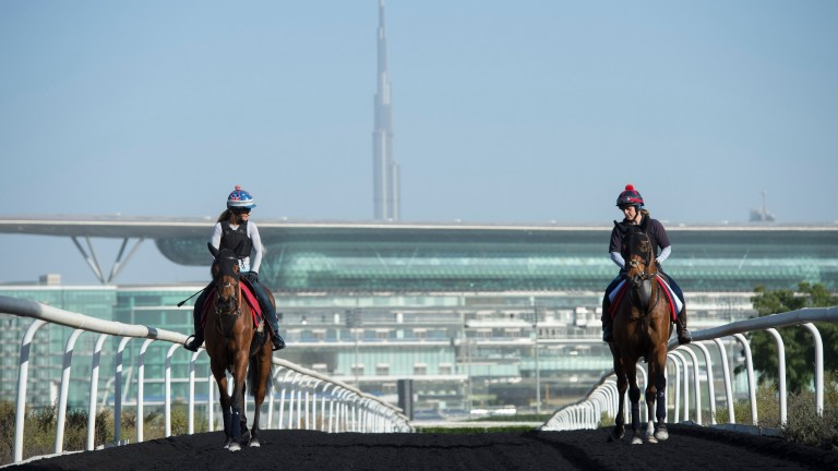 David Simcock's Sheema Classic and Gold Cup contenders Desert Encounter (left) and Sheikhzayedroad