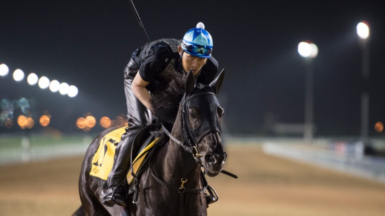 Beast from the East: Japan's Dubai Turf challenger Vivlos