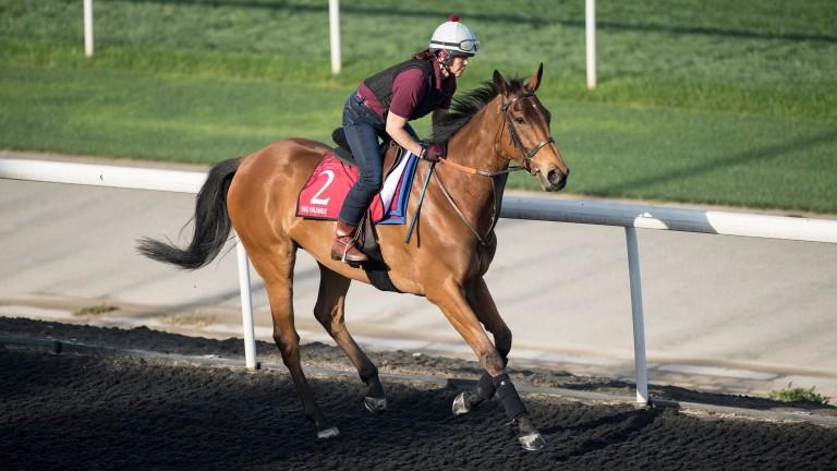 Big Orange: returns to the training track under work rider Gilly Dolman on Wednesday