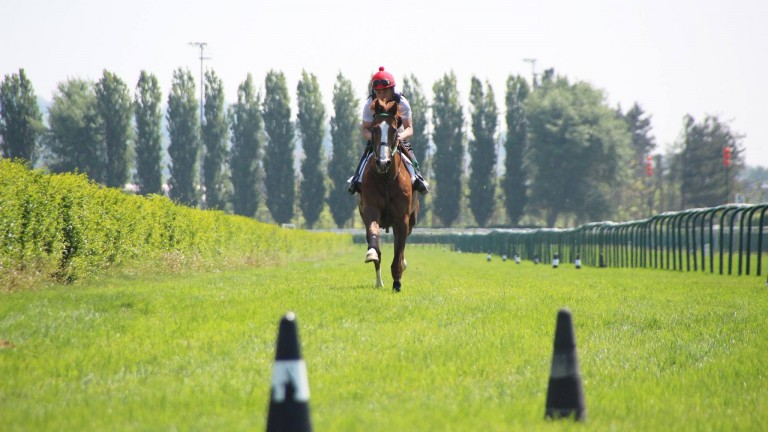 The Arqana Breeze-up lots will be put through their paces on the Deauville turf