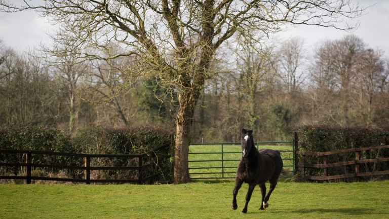 Klairon Davis, winner of the 1996 Queen Mother Champion Chase, pictured enjoying his retirement in 2016 at Chris Jones's farm near Killeen, County Meath